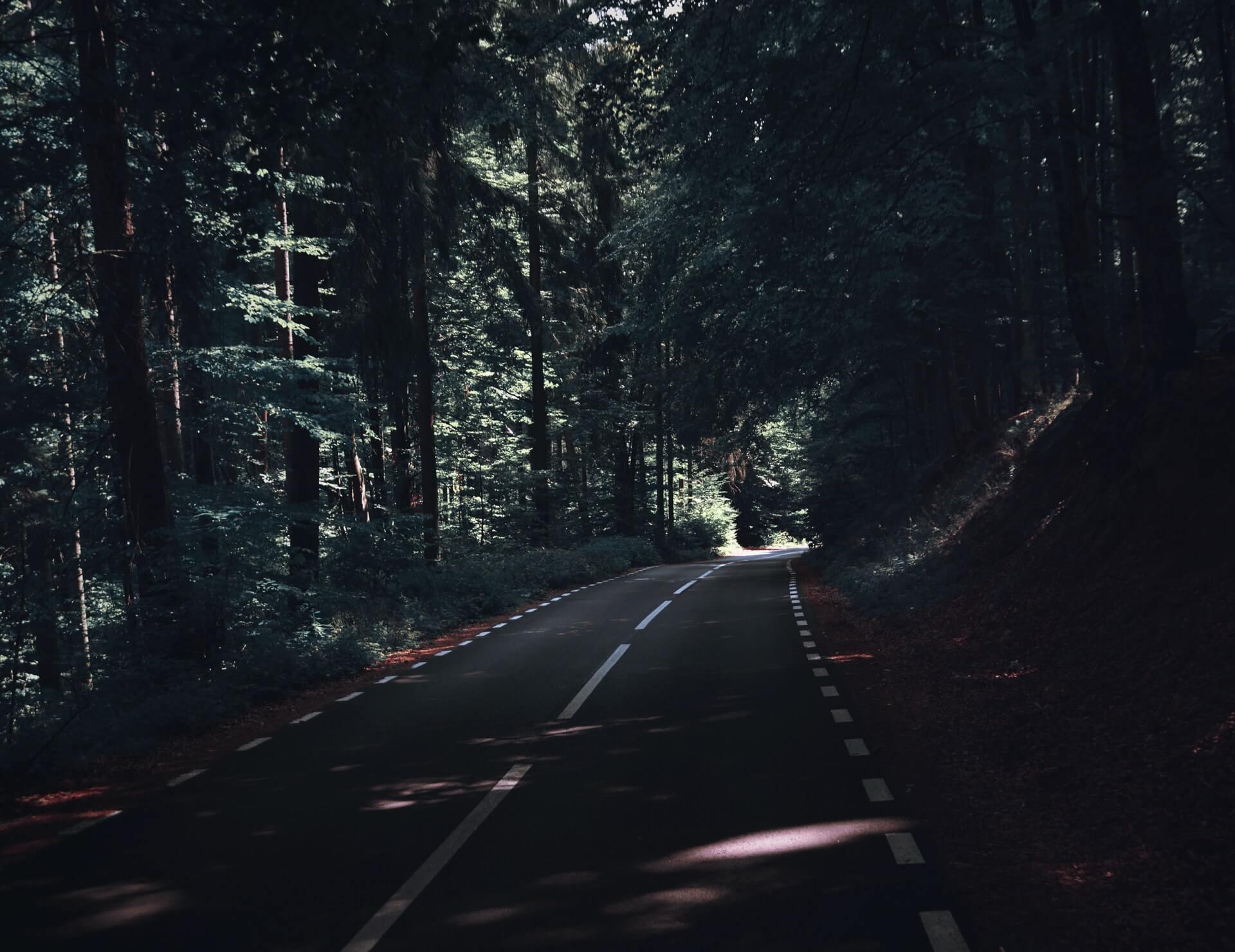 Lumberjack's Dynasti – skoghogger for en dag